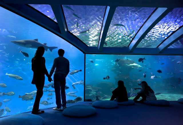 Entradas Palma Aquarium