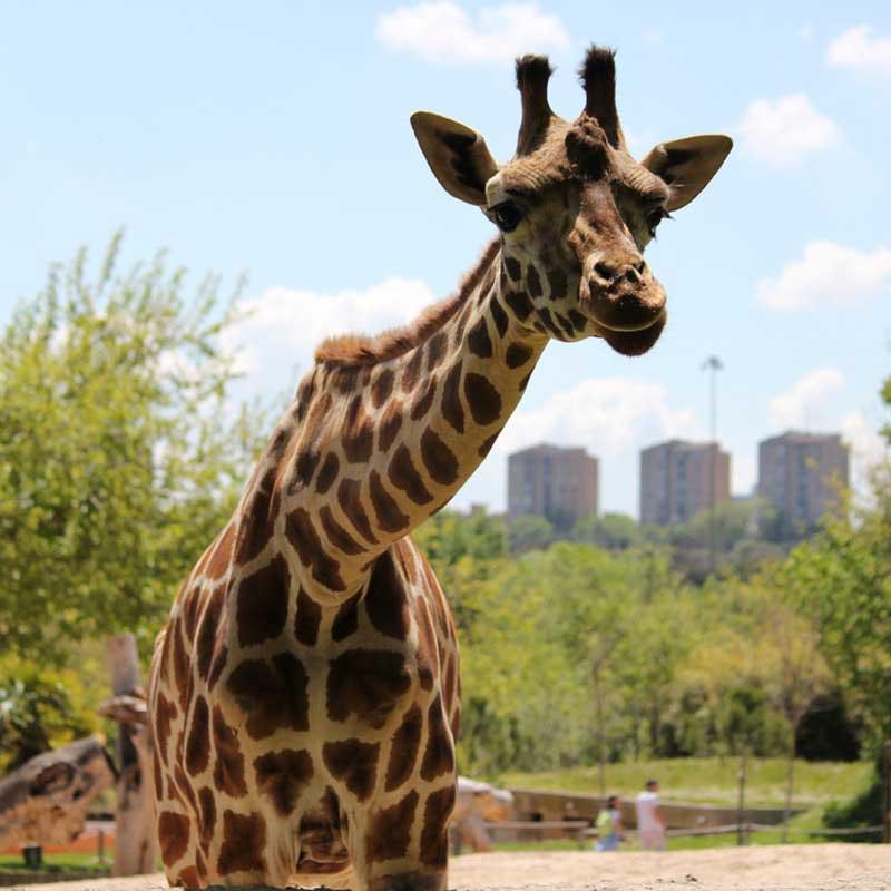zoo Madrid con niños