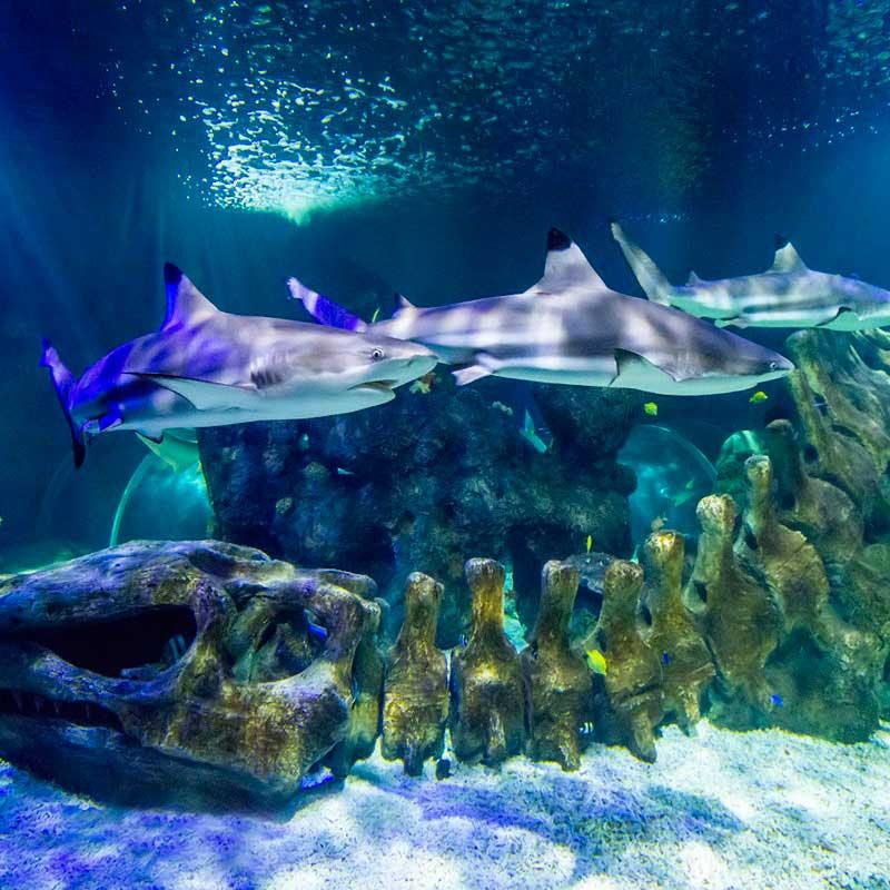 acuario benalmadena entradas