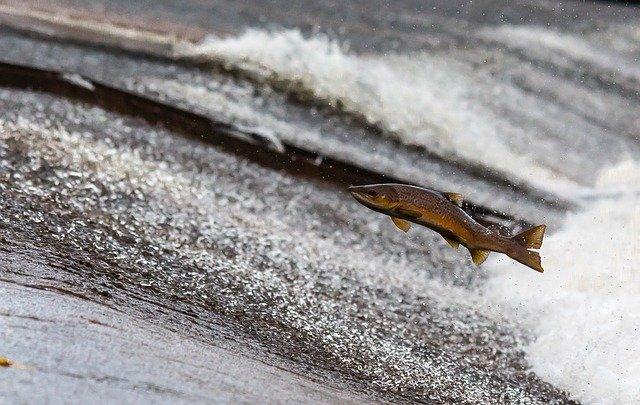 Ecosistema de aguas dulces
