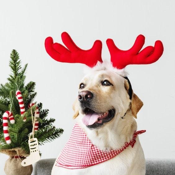 Fotos divertidas de Navidad