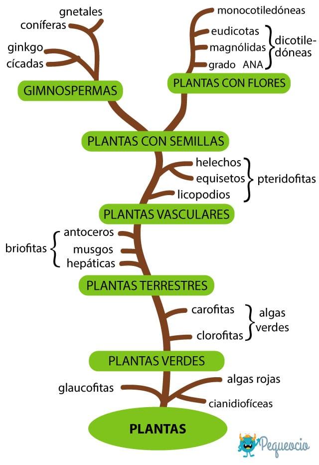 Tipos De Plantas Cómo Se Clasifican Pequeocio