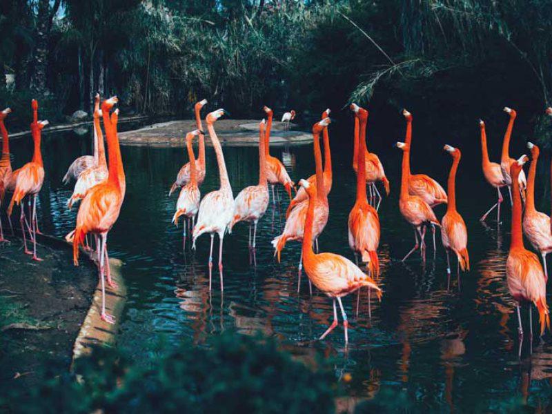 Barcelona zoo entradas