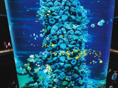 Entradas acuario Poema del Mar Las Palmas