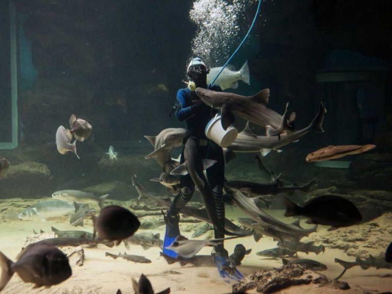 museo maritimo del cantábrico santander