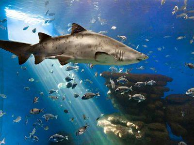 Palma aquarium Mallorca entradas