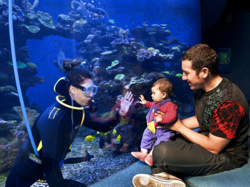 palma-aquarium-ninos