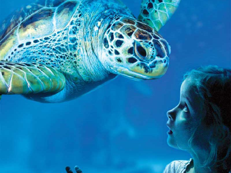 sea life acuario benalmadena