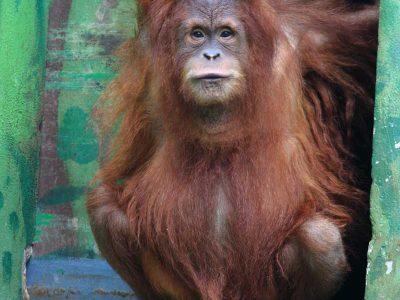 Zoo Santillana del Mar entradas
